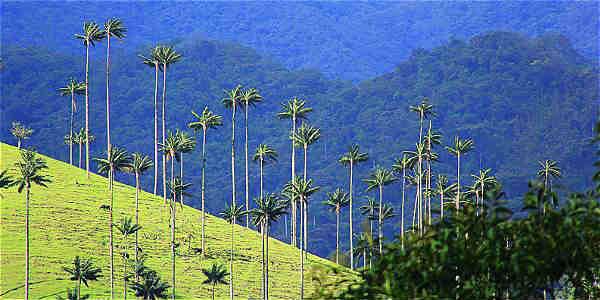 Valle-del-Cocora